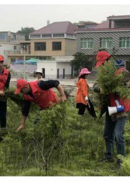 蓼南乡:干群同心齐努力 爱护环境我先行