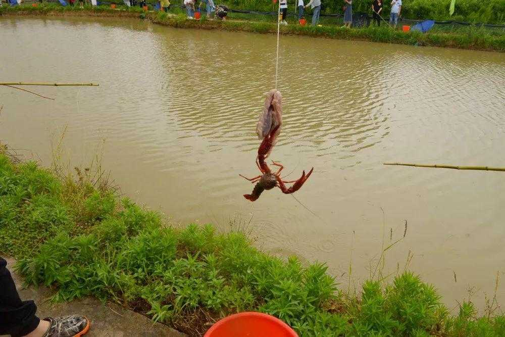 有没有人知道哪里可以钓龙虾?