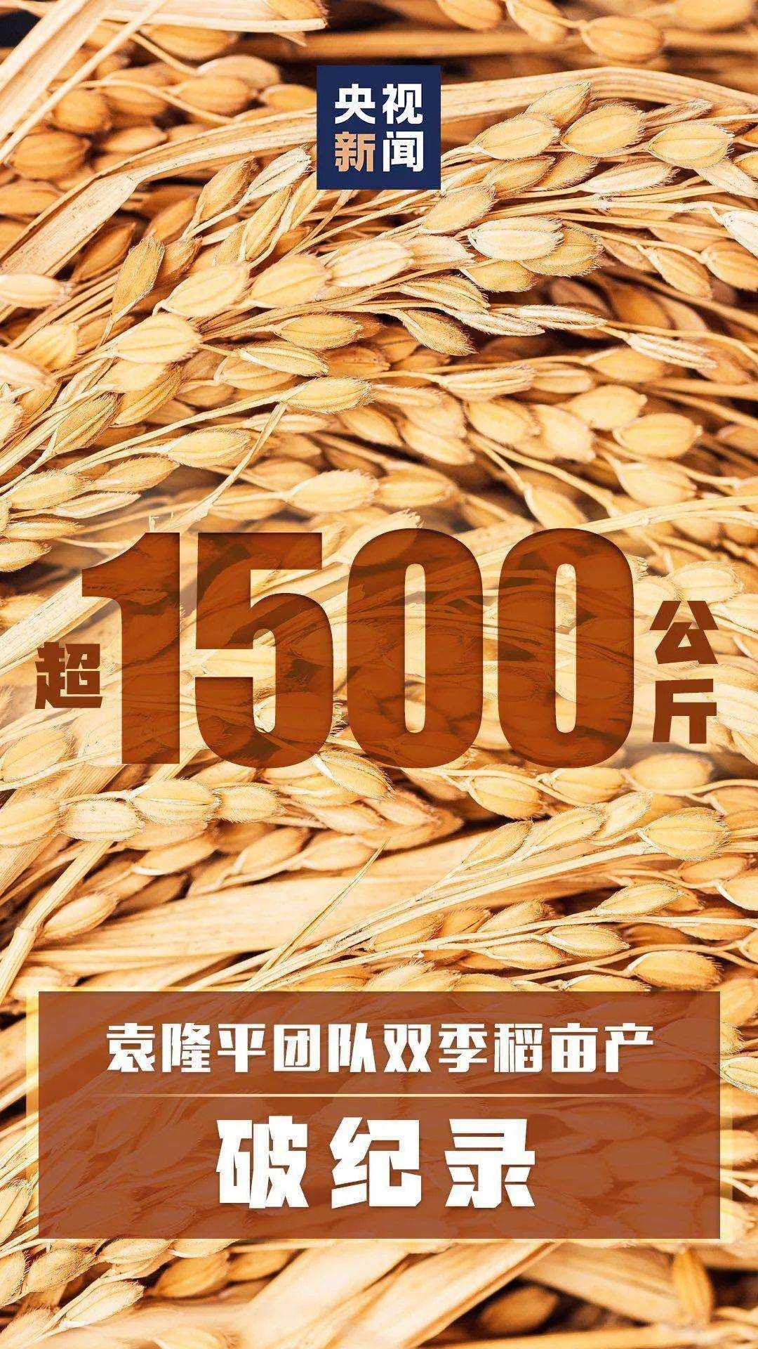 水稻双季突破1500公斤.jpeg